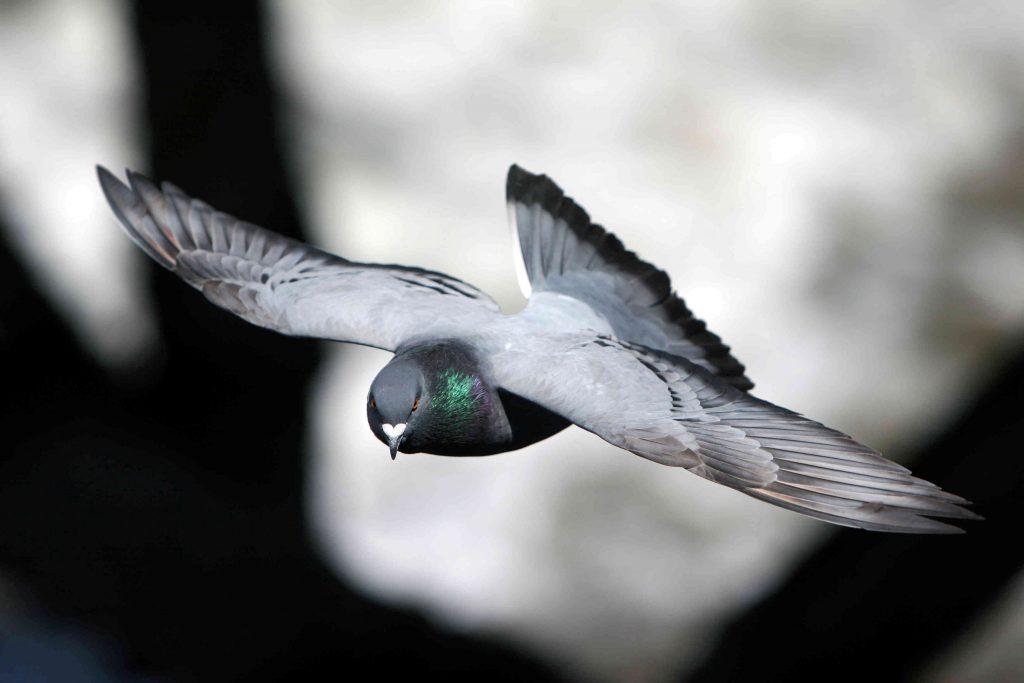 Pas op voor wintervorm en scheefvliegers